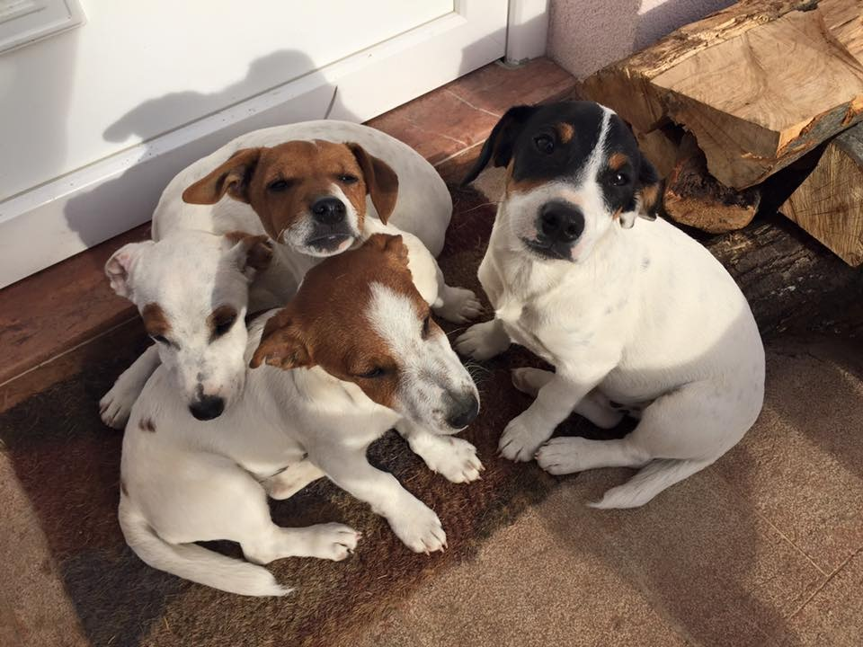 Four cute dogs huddled together